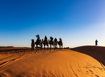 Dromadery na pustyni