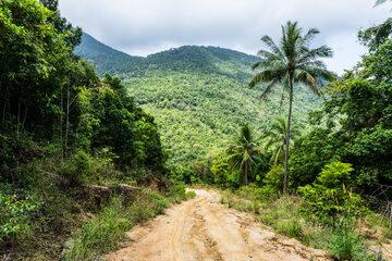 Dżungla w Wietnamie