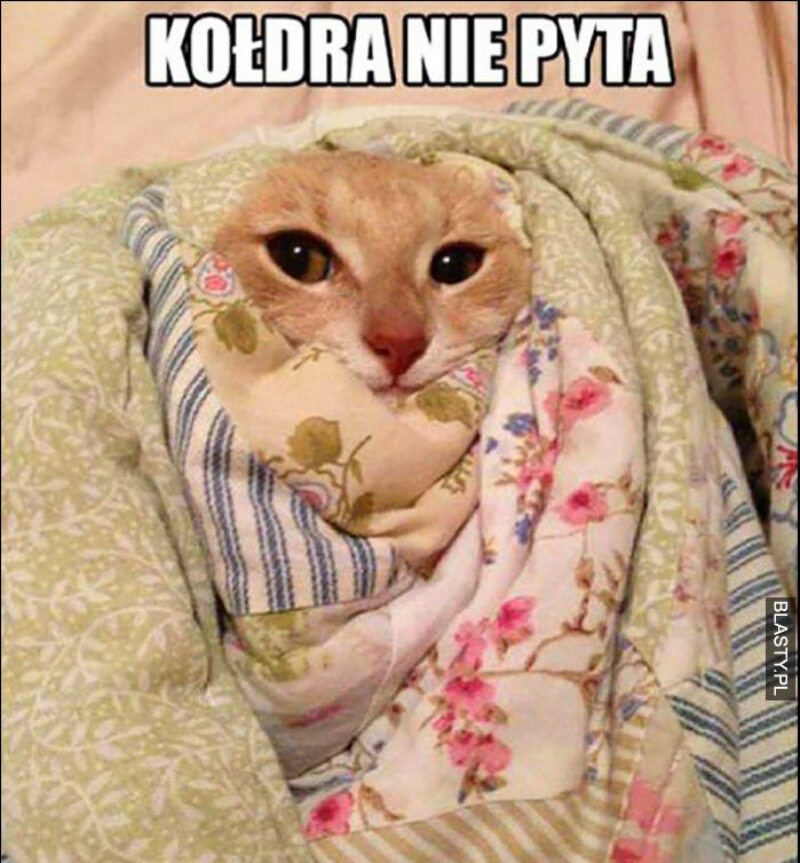 Fragment mema z kotem pod kołdrą