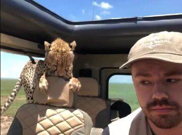 Gepard w samochodzie
