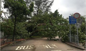 Groźny tajfun uderzył w rejonie Hongkongu