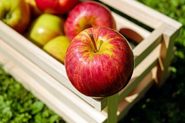 Jabłka, zdj. ilustracyjne