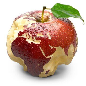 Jabłko, zdjęcie ilustracyjne