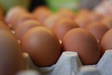 Jajka, zdjęcie ilustracyjne