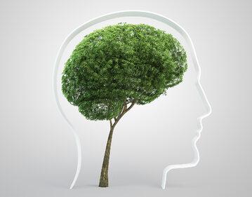 Jaki wpływ na zdrowie ma mieszkanie w pobliżu terenów leśnych?