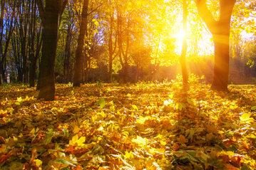 Jesień, zdjęcie ilustracyjne