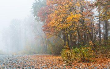 Jesienna mgła