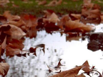 Jesienne liście w deszczu