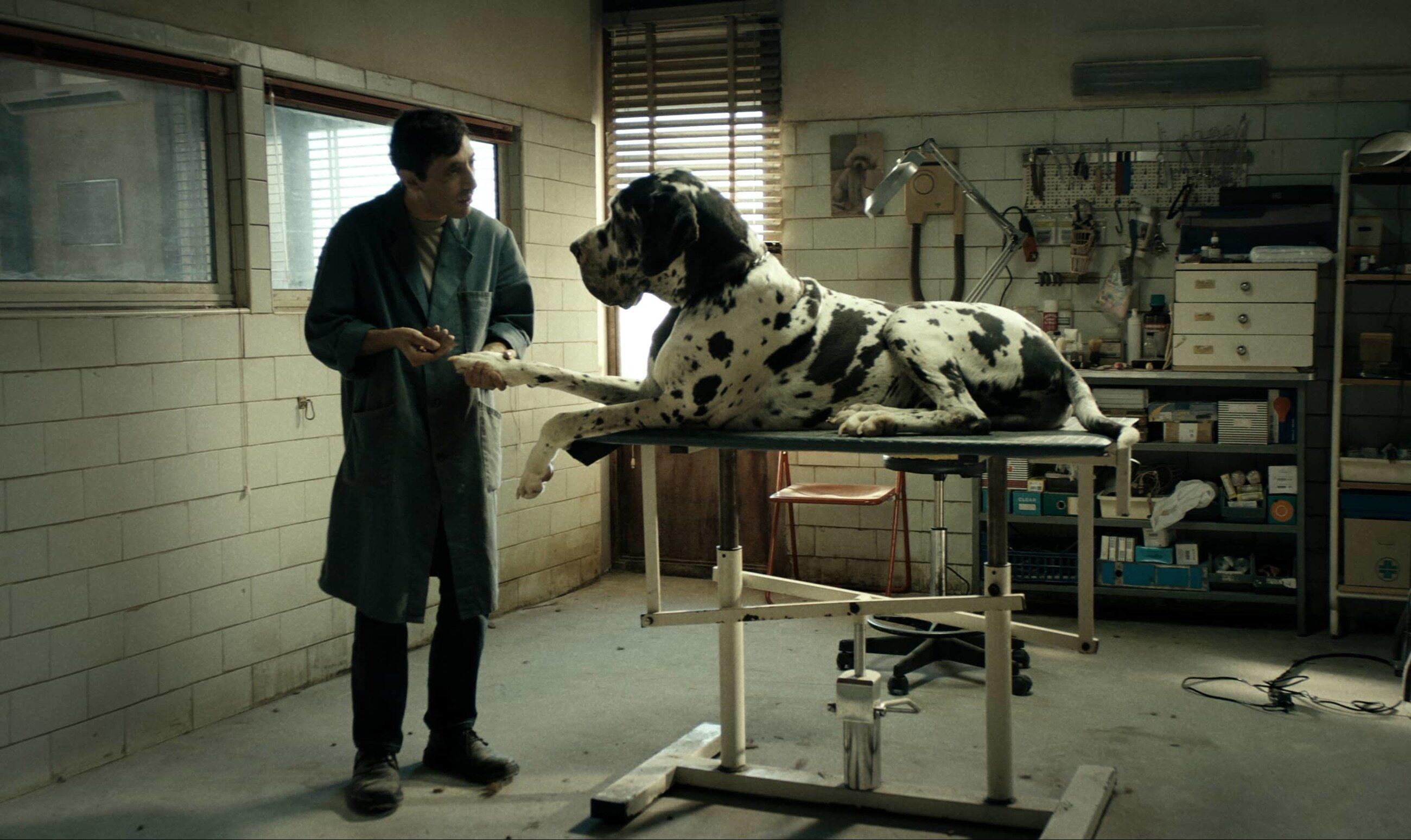 "kadr z filmu ""Dogman"" (2018)"