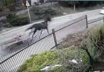 Kadr z nagrania monitoringu. Uciekający koń z furmanką