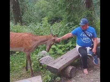Kadr z nagrania. Turysta droczy się z jeleniem