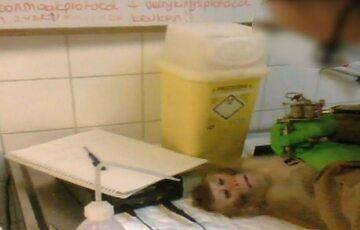 Kadr z wideo opublikowanego przez Activists from Animal Defenders International
