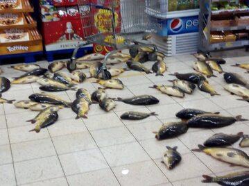 Karpie na podłodze supermarketu