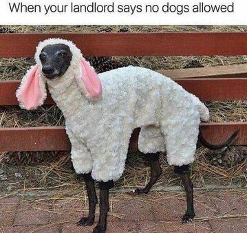 """""""Kiedy właściciel mieszkania, które wynajmujesz, mówi ci, że psy są niedozwolone"""""""