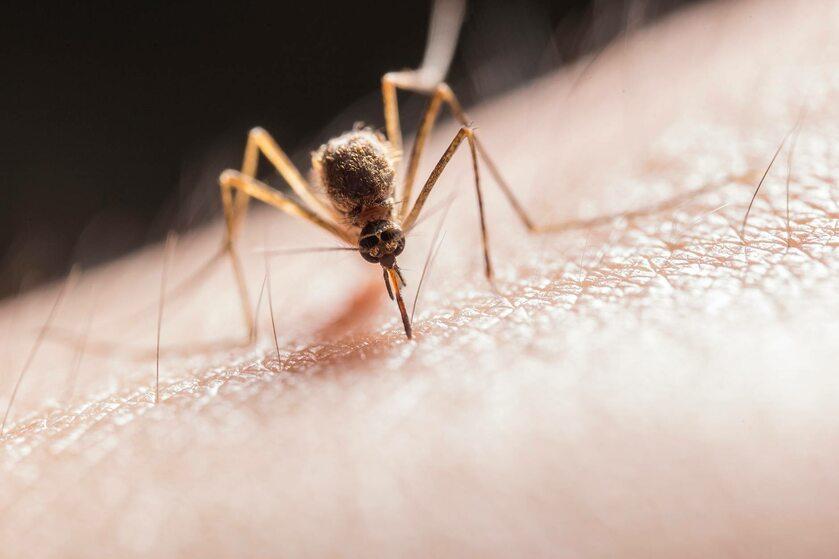 Komar, zdj. ilustracyjne