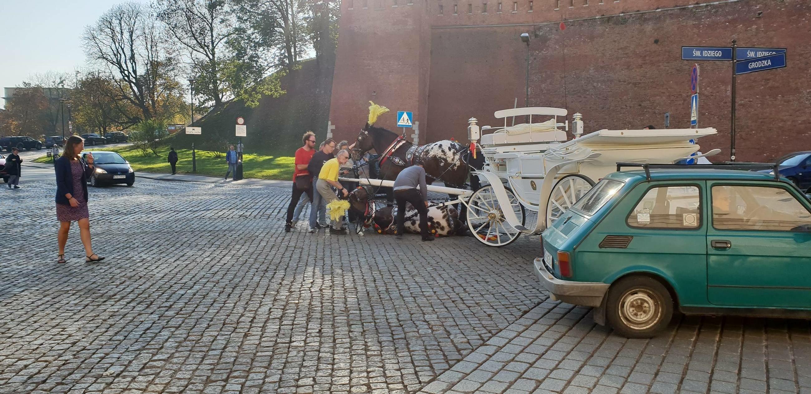 Koń leżący na ulicy w Krakowie