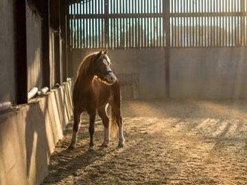 Koń w stajni, zdjęcie ilustracyjne
