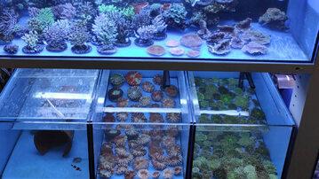 Koralowce uratowane na Okęciu
