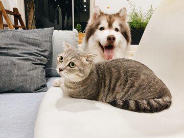 Kot i pies, zdjęcie ilustracyjne