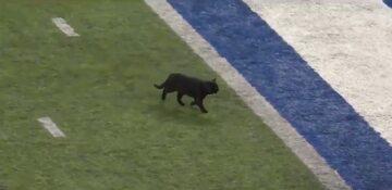 Kot na boisku