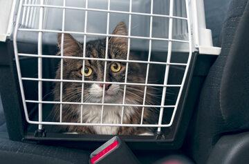 Kot w samochodzie