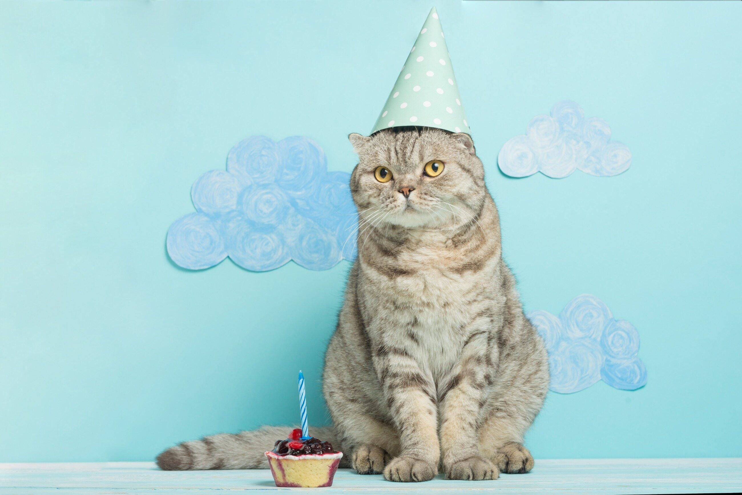 Kot w urodzinowym kapeluszu, zdjęcie ilustracyjne