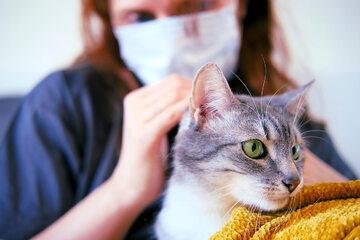 Koty mogą się zakazić koronawirusem leżąc w łóżku właściciela chorującego na COVID-19.
