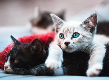 Koty (zdj. ilustracyjne)
