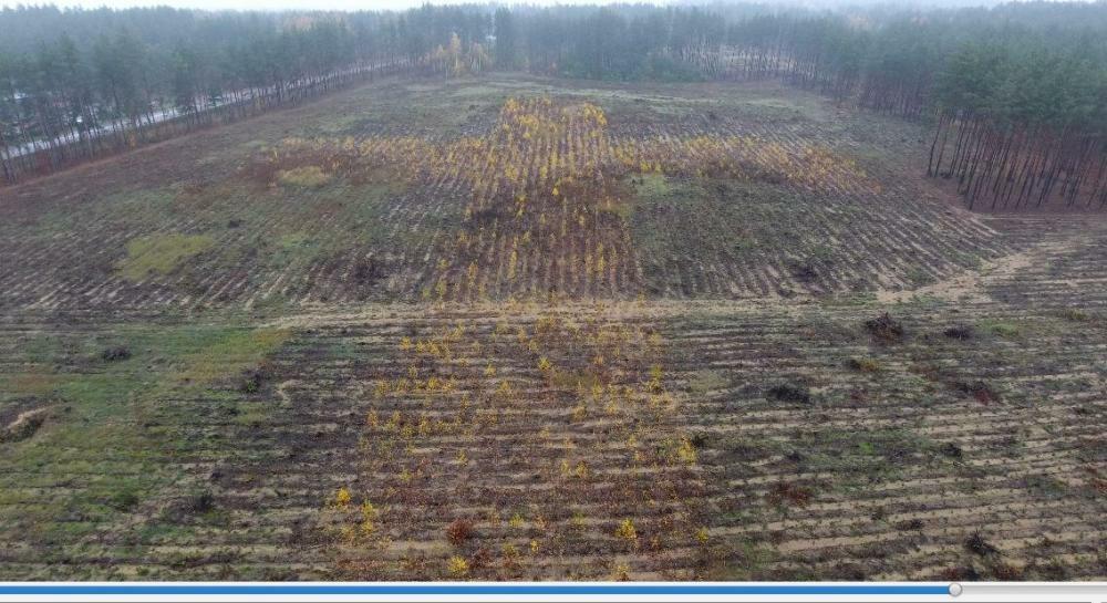 Krzyż powstały z sadzonek drzew