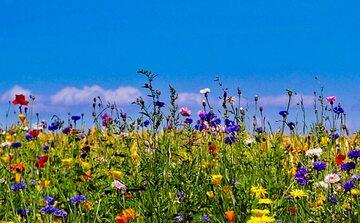 Kwietne łąki stanowią element małej retencji, ponieważ wiążą wilgoć w glebie, filtrując wody opadowe. Choć są charakterystyczne dla terenów wiejskich czy dolin rzecznych, warto je też zakładać w przydomowych ogródkach, miejskich parkach oraz na skwerach