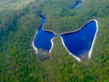 Las równikowy na wyspie Fraser