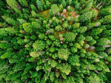 Las, zdjęcie ilustracyjne