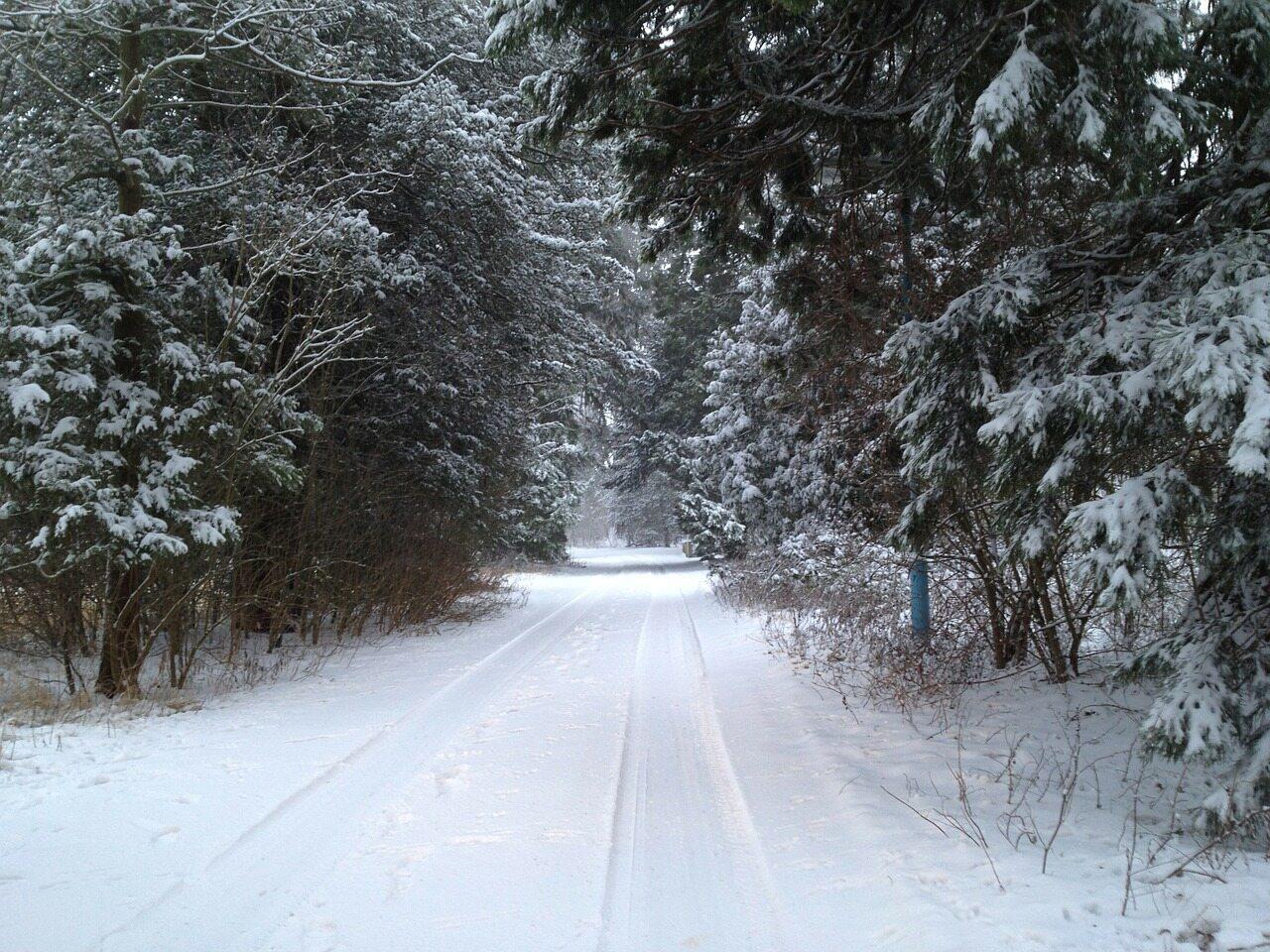 Las zimą, zdjęcie ilustracyjne