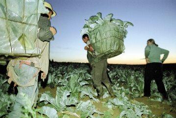 Ludzie: towar eksportowy Ukrainy