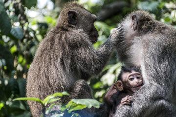 Małpy, zdjęcie ilustracyjne