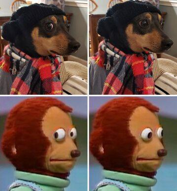 Memiczny pies