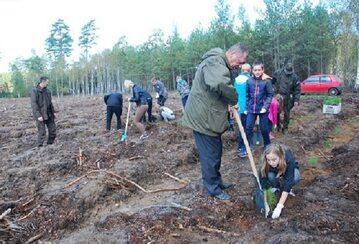 Minister Szyszko sadzi drzewo