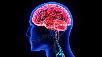 Mózg, zdj. ilustracyjne