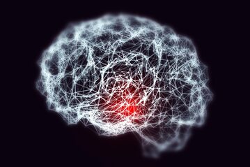Mózg, zdjęcie ilustracyjne
