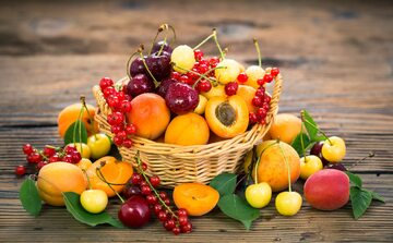 Muszki owocówki