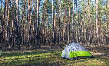 Namiot w lesie, zdjęcie ilustracyjne
