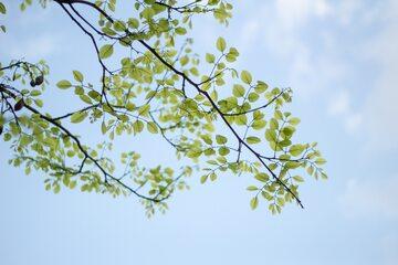 Natura - zdjęcie ilustracyjne