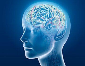 Naukowcy potrafią już przetwarzać fale mózgowe na konkretne słowa.