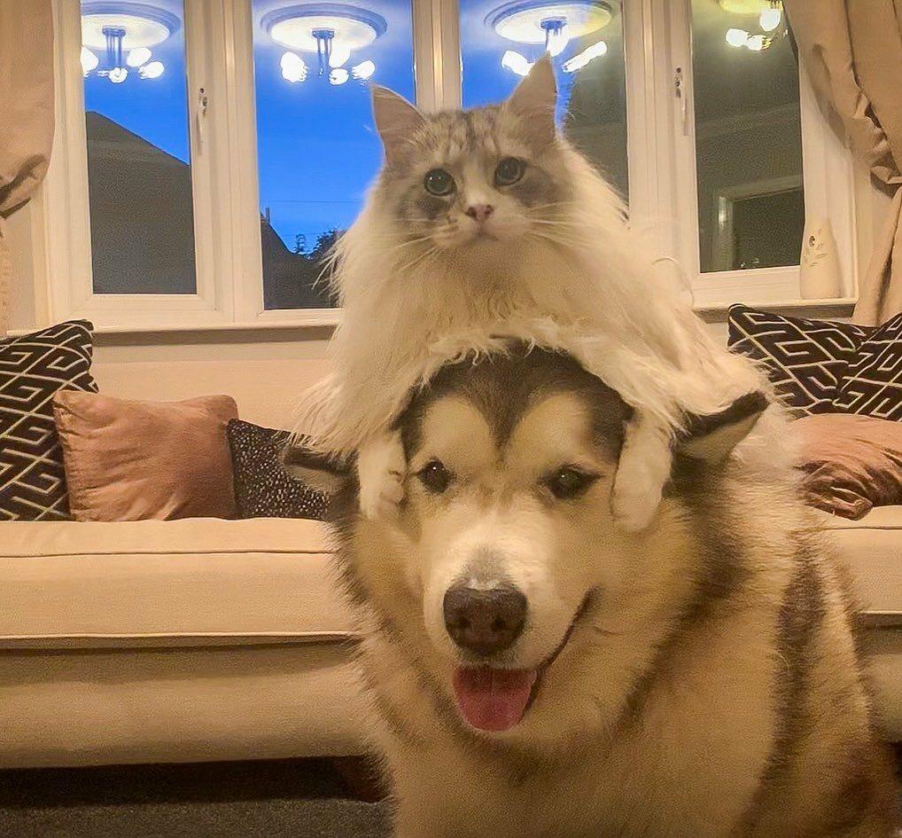 Niko i Milo