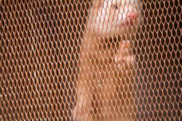 Norka w klatce, zdjęcie ilustracyjne