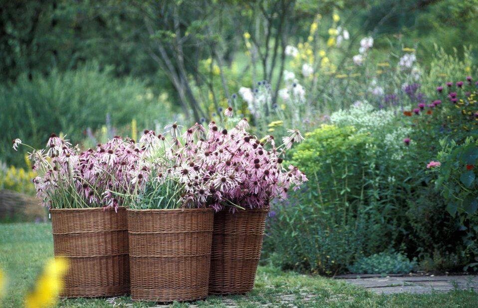Ogród Dr. Hauschka