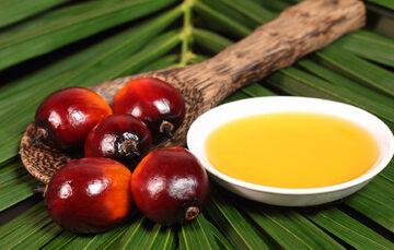 Olej palmowy, zdjęcie ilustracyjne