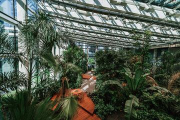 Olivia Garden – ogród tropikalny w gdańskim biurowcu
