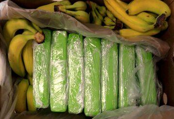 Paczki z kokaina ukryte w transporcie bananów