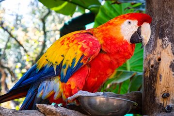 Papuga, zdjęcie ilustracyjne